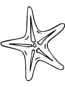 морская звезда скачать