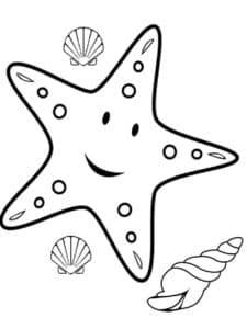 морская звезда и ракушка