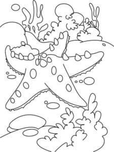 морская звезда и водоросли