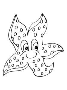 морская звезда с лицом
