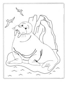 морж на льдине