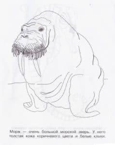 детская раскраска морж