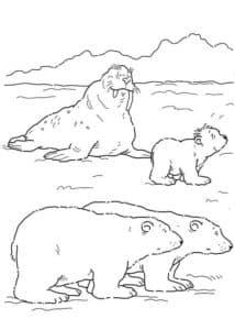 моржи и медведи