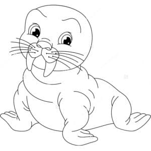 маленький морж