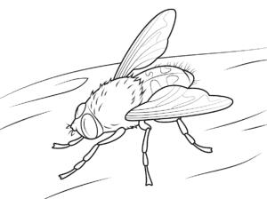 детская раскраска муха