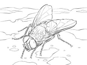 муха пьет