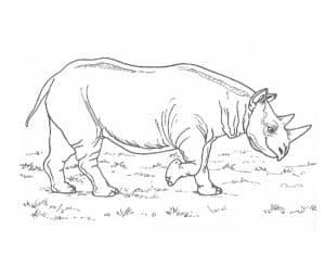 детская раскраска носорог