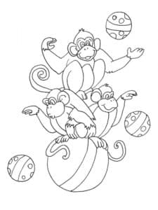 цирковые обезьяны