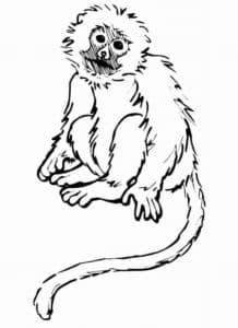 обезьяна с длинным хвостом