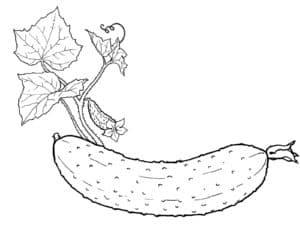 огурец с листьями