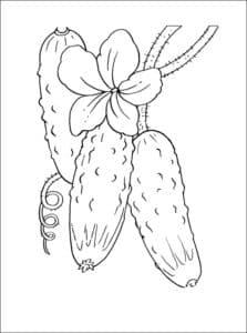 цветущий огурец