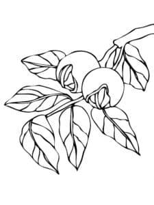 листья с орешками