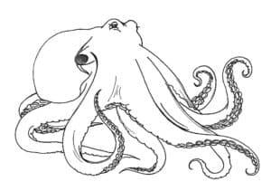 осьминог одноглазый
