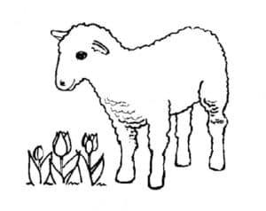 овца и тюльпаны