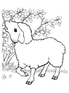 овца кушает