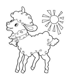 овца и солнце