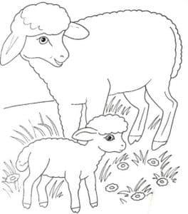 две овечки раскраска детская
