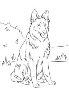овчарка на природе