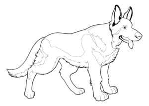собака овчарка раскраска