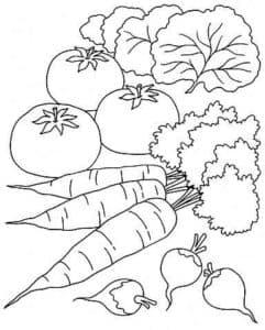 морковка редиска и помидоры