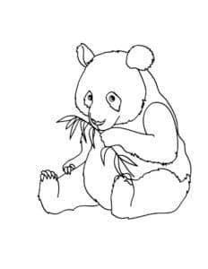 панда сидит с веткой