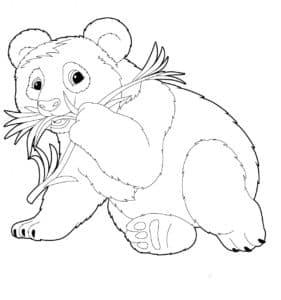 панда жует траву