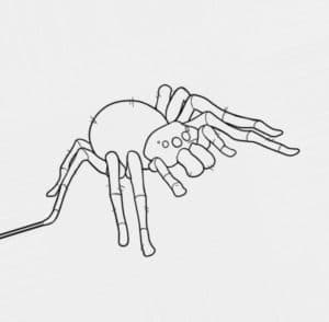 раскраска детская паук