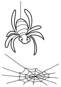 большой паук и паутина