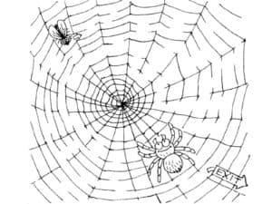 муха в паутине
