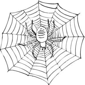 детская раскраска паук на паутине