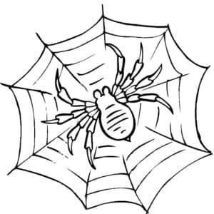 страшный паук на паутине