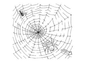 паук и муха в паутине