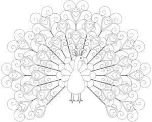 раскраска для детей павлин