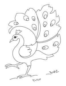 жар птица