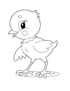 раскраска птенец