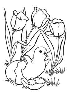 маленький птенец и тюльпаны