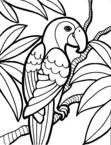 попугай раскраска