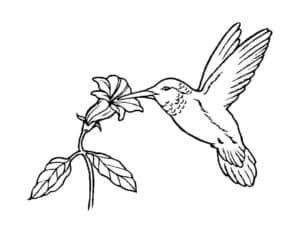 колибри и цветочек
