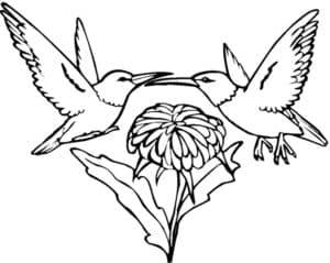 две колибри на цветке
