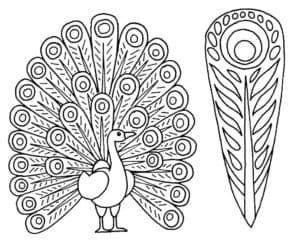 Жар птица и перо