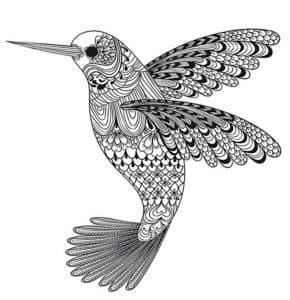 раскраска колибри антистресс