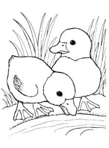 маленькие птенцы