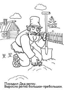 посадил дед репку