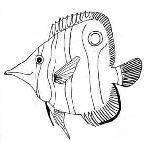 плоская рыба