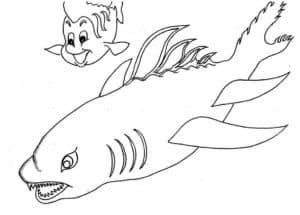 акула и немо