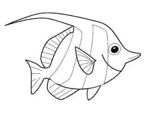 плоская рыбка раскраска