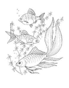 рыбы и водоросли