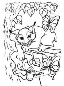 рысь и бабочки