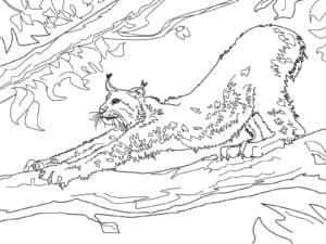 рысь на дереве