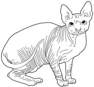 кот сфинкс